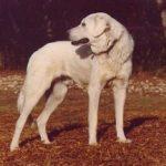 Akbas Hunde