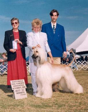 Afghanischer Windhund Familie