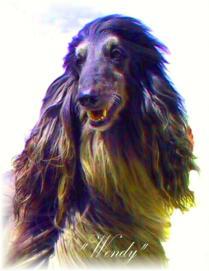 Afghanischer Windhund Portrait