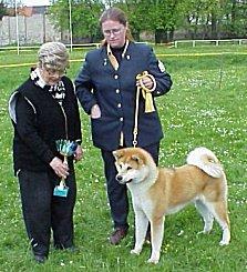 Akita Inu Hundeschau