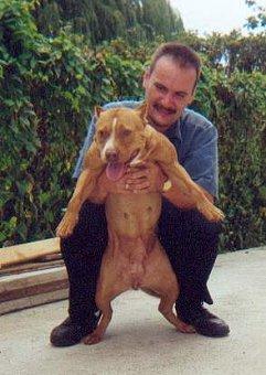 American Pitbull Terrier Familie
