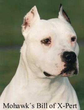 Fotos von American Staffordshire Terrier