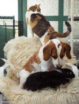 Beagle im 3er Pack