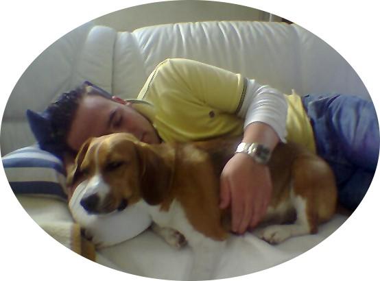 Bilder von Beagle