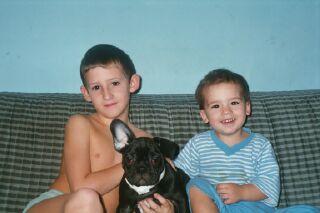 Französische Bulldogge Familie