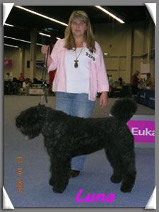 Bouvier des Flandres Hundeschau