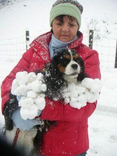 Cavalier King Charles Spaniel im Schnee