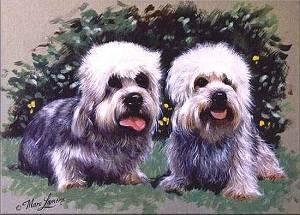 Dandie Dinmont Terrier Bilder