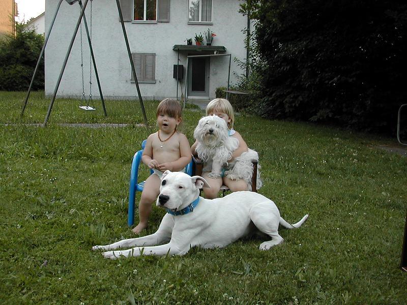 Dogo Argentino Familie