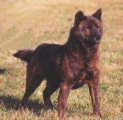 Kai Hund Bilder
