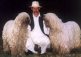 Komondor Fotos