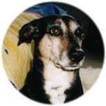 Brandlbracke Portrait
