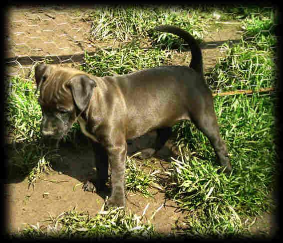 Patterdale Terrier Bilder