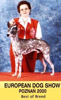 Bilder von Peruanischer Nackthund Grosse