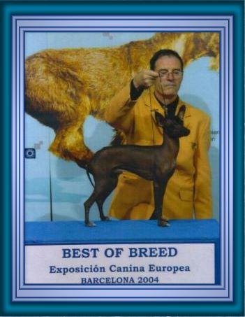 Peruanischer Nackthund Kleine Fotos