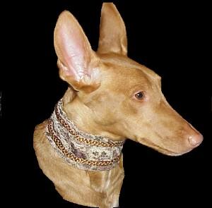 Pharaonenhund Bilder