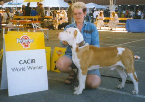 Spanischer Laufhund Bilder