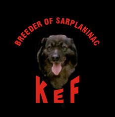 Sarplaninac KEF