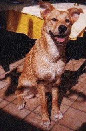 Foto von Serra da Estrela Berghund