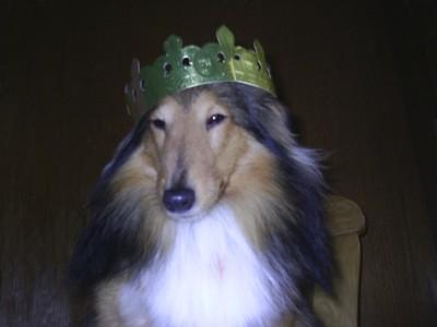 Foto von Shetland Schäferhund