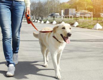 Hundesteuer in der Schweiz