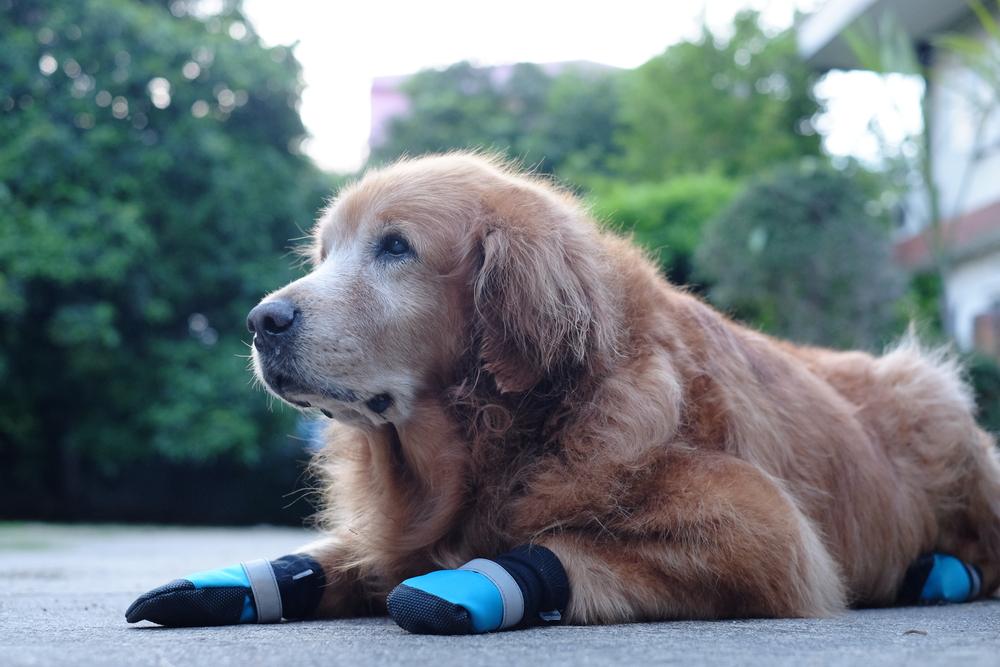 Schuhe für den Hund