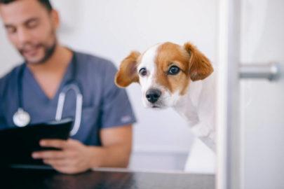 Gesundheitscheck bei Hunden