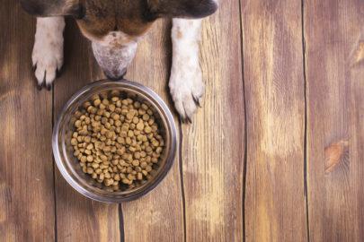 Hormone im Hundefutter