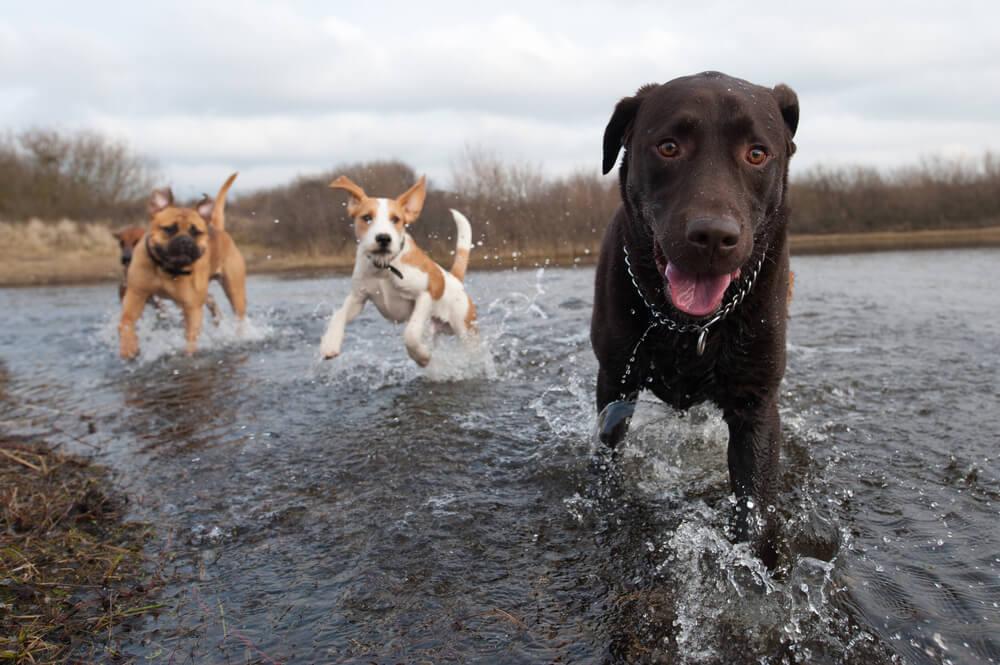 Wasserspiele mit Hunden