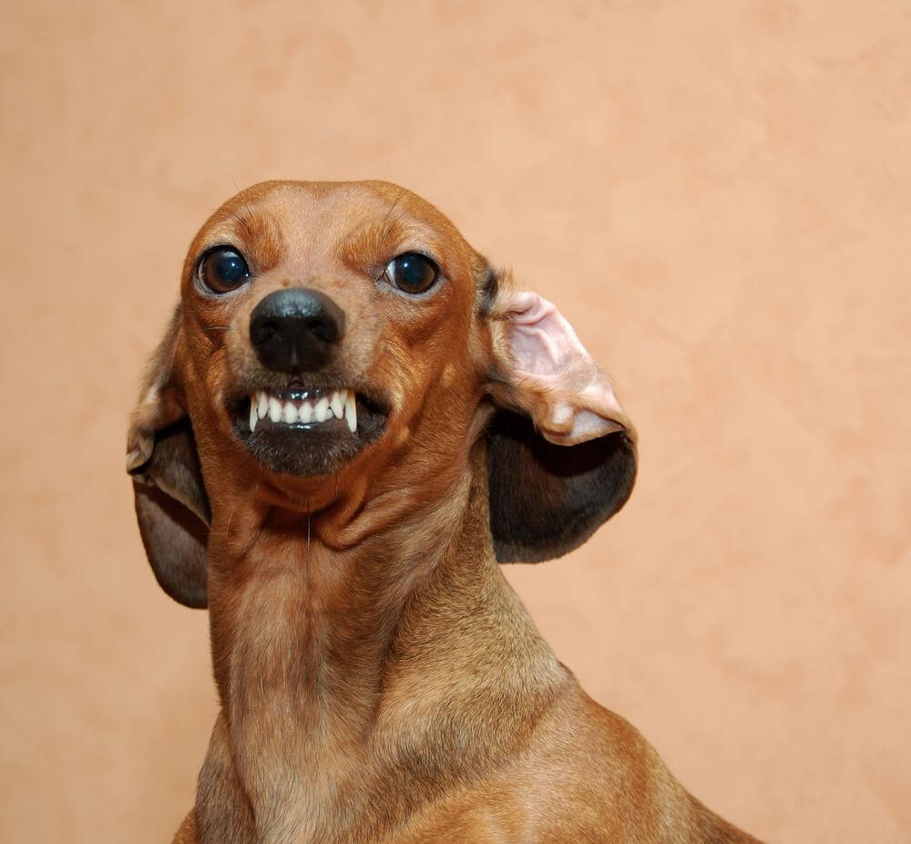 Hunde können Angst riechen